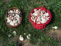 Mushroom baskets with meadow mushrooms