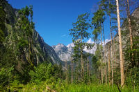 Nature impression at the Obersee