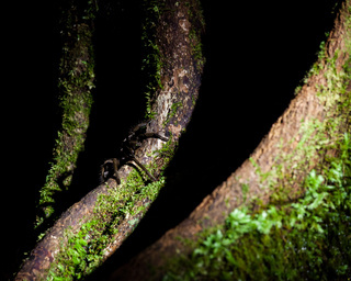 Spider at borneo rainforest