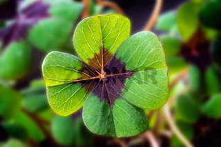 Detail Image of lucky clover