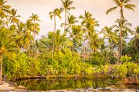 Palm trees at lagoon on Big Island, Hawaii