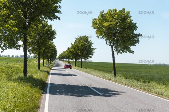 country road, grove, Boiensdorf, Am Salzhaff, Mecklenburg-Western Pomerania, Germany, Europe