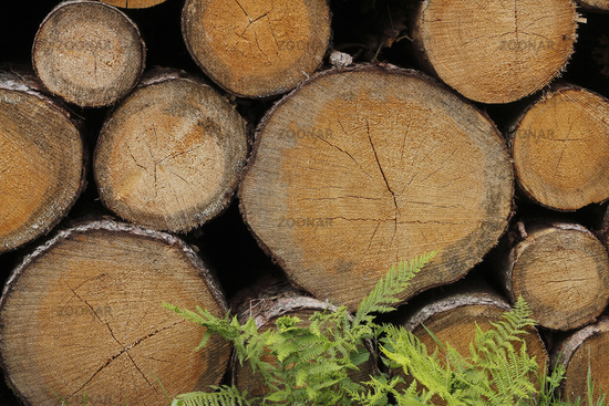 Trunk wood