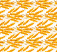 Wheat seamless pattern. Spikelets repeating texture, endless background. Vector illustration