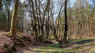 Der trockengefallene Nettelgraben bei Kloster Chorin