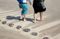 Coastal protection by wooden groynes on the sandy beach - two women walk barefoot on the beach