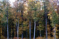 Forest edge deciduous forest