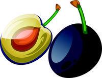 Blue damson plum cut in half cartoon fruit vector illustration on white background.