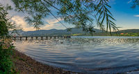 Panorama of ducks on the bavarian Tegernsee.