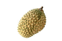 Malaysia famous fruits Durian