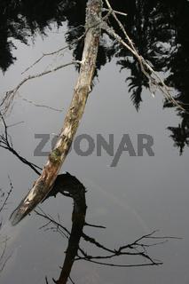 Abgestorbener Baum