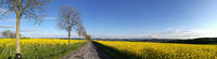 Blossoming rape fields in the foothills of the Erzgebirge Mountains