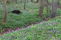 Early flowering plants
