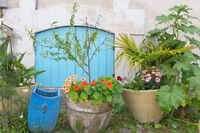 Plants in pots outdoor in France