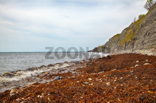 The coastline of Monmouth Beach with the cliffs of Liassic rocks at Chippel Bay. West Dorset. England