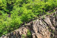 Landschaft mit Bäumen und Felsen im Harz