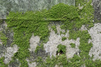 mossy wall in hangdong railroad