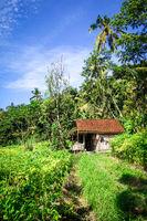 Plantations in green fields, Sidemen, Bali, Indonesia