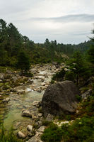 A big rock stands in the foreground with a rocky river going along the forest.