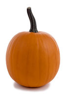 One orange pumpkin