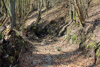 A dry out ditch in the forest of former abbey Chorin