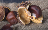 Collected chestnuts