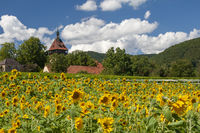 Geilweilerhof with sunflower field