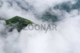 mountain forest in cloud mist