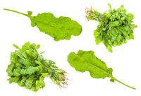set from green caucasian cress (tsitsmati) herbs