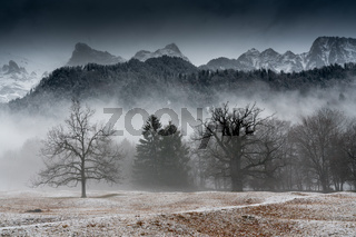 winter forest and mountain landscape in bad weather with fog and rime on the ground