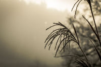 Ice Crystals around frosted plant in winter  with white space