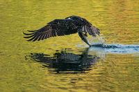 Osprey Takeoff XII