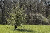 Fruehling im Naturschutzgebiet Kuehkopf