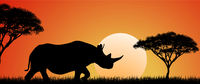 Wild African rhino at sunset