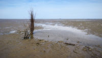 Cuxhaven - Tidal flats with bundle of brushwood (Buschpricke), Germany