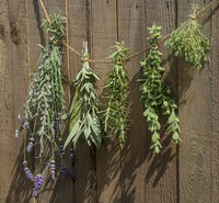 Culinary herbs drying in the sun in front of a rustic wooden background