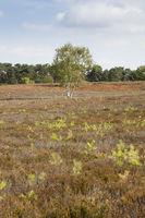 Blossom heathland