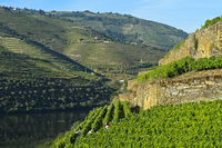 Terraced vineyards on the steep slopes of the Hell Valley, Vale do Inferno, Pinhao,Portugal