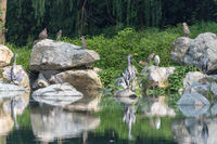 Various water birds by a lake