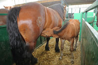 Dam Horse Foal