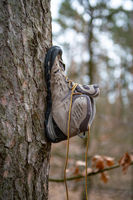 a shoe attatched to the trunk of a tree
