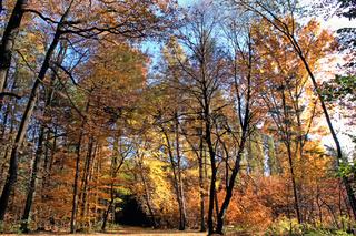 Lichtdurchfluteter Herbstwald