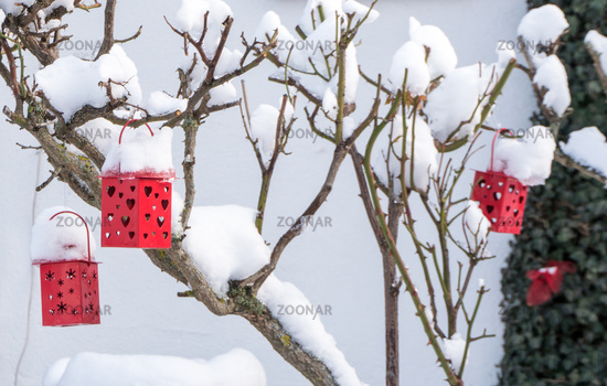 decorative red lanterns with hearts on a snow covered rose bush in winter