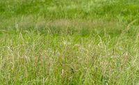 meadow closeup