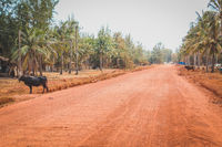 empty rural  road  through palm tree landscape with buffalo  -