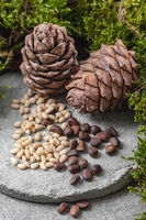 Pine cones and nuts on a gray concrete background. Vertical frame.
