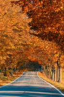 beautiful trees on alley in autumn