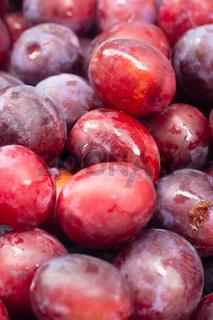 Unfolded berry plum. Lots of plums. Seasonal berry.