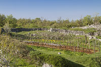 Landscape in Istria
