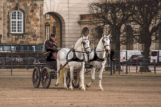 February 20, 2019. Military officer training two white horses from royal stables in front. Horses and cart with rider at Christianborg palace. Royal Stable in Denmark territory Christiansborg Slot